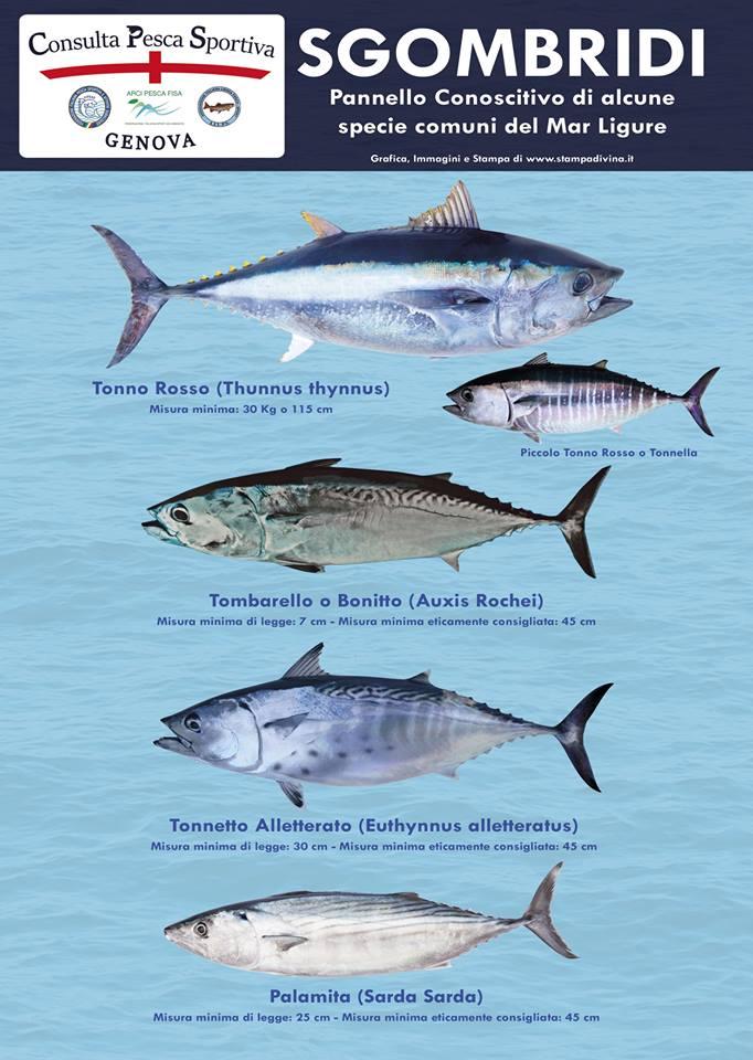 Consulta Pesca Sportiva
